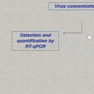 Innovative Methods to Detect Viruses in Food