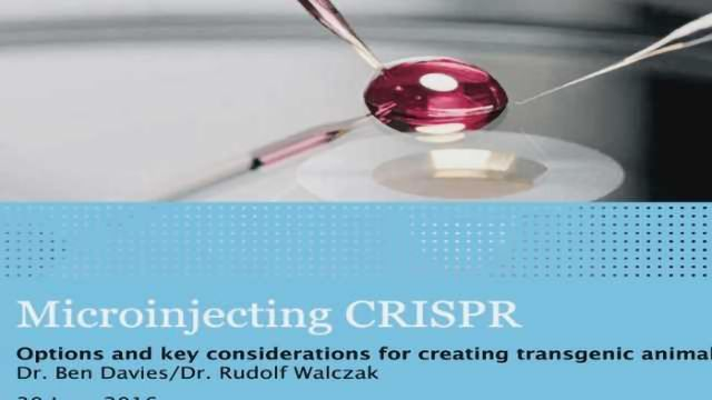 Microinjecting CRISPR: Options and key considerations for creating transgenic animal models