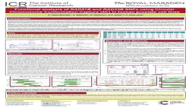 Functional Analysis of RAD51B and RAD23B SNPs using Circular Chromosome Conformation Capture (4C) in Human Prostate Cell Lines