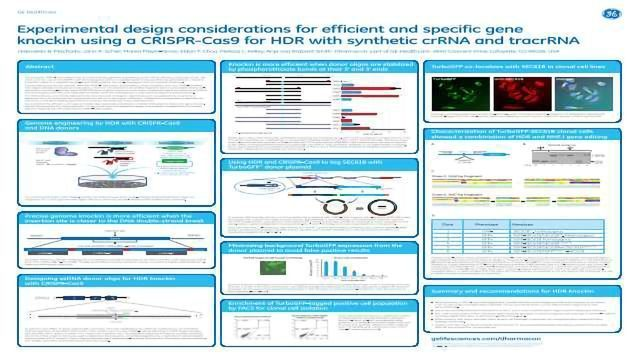 Experimental design considerations for efficient and specific gene  knockin using a CRISPR-Cas9 for HDR with synthetic crRNA and tracrRNA