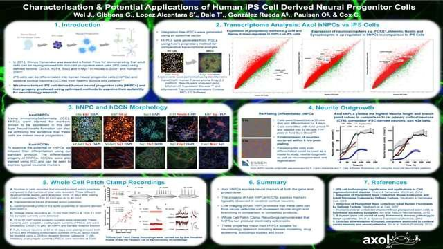 Characterisation & Potential Applications of Human iPS Cell Derived Neural Progenitor Cells