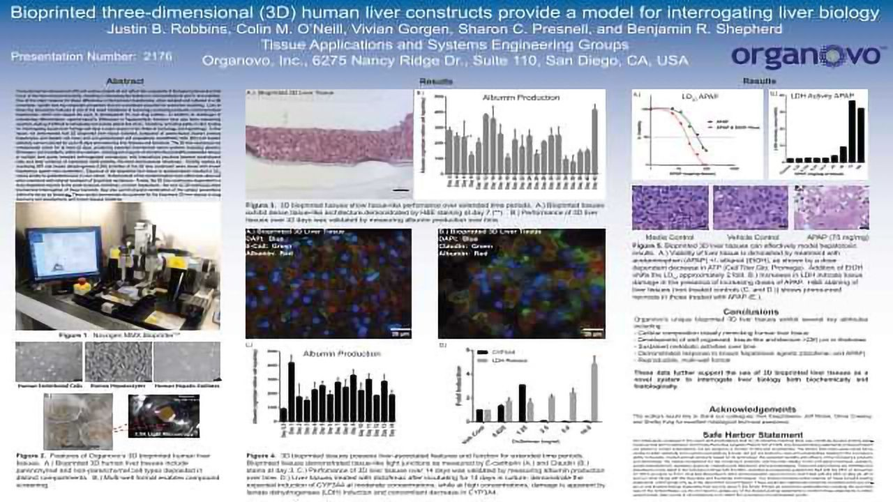 Bioprinted three-dimensional (3D) human liver constructs provide a model for interrogating liver biology