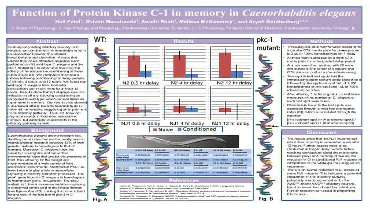 Function of Protein Kinase C-1 in memory in Caenorhabditis elegans