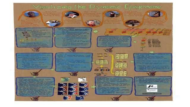 Visualizing the Dynamic Epigenome