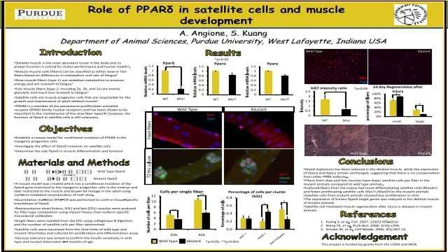 Role of PPARd in satellite cells and muscle differentiation