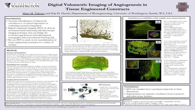 Digital Volumetric Imaging of Angiogenesis in  Tissue Engineered Constructs