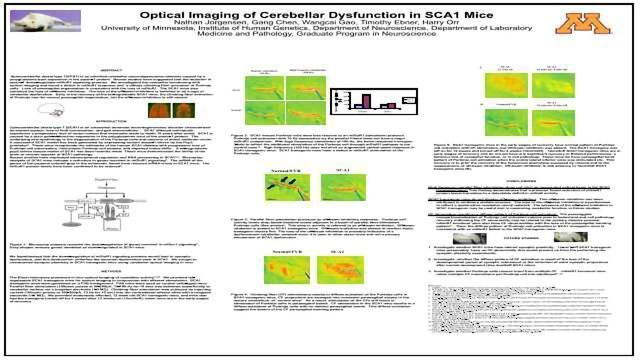 Optical Imaging of Cerebellar Dysfunction in SCA1 Mice