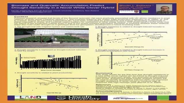Biomass and Quercetin Accumulation Predict Drought Sensitivity in a Novel White Clover Hybrid
