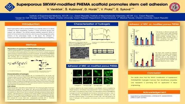Superporous SIKVAV-modified PHEMA scaffold promotes stem cell adhesion