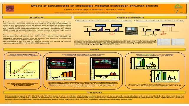 Effects of cannabinoids on cholinergic-mediated contraction of human bronchi