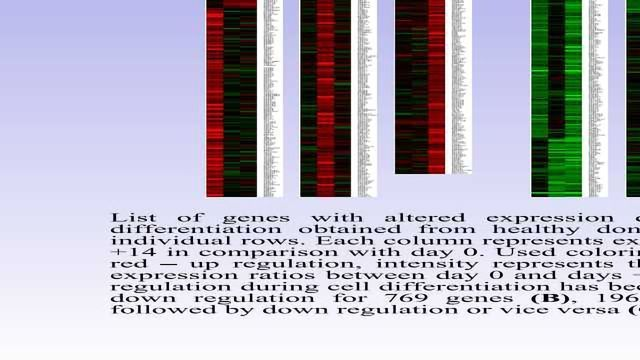 Expression Profiling of CD34+ of Peripheral Blood of Patients with Lymphoma During ex vivo Granulocytic Differentiation