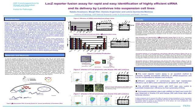 LacZ Reporter Fusion Assay for Rapid and Easy Identification of Highly Efficient siRNA and its Delivery by Lentivirus into Suspension Cell Lines