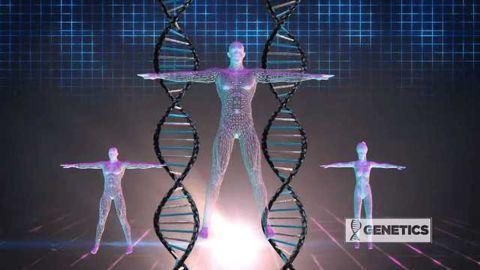 Genetics - Perfect Body Secret