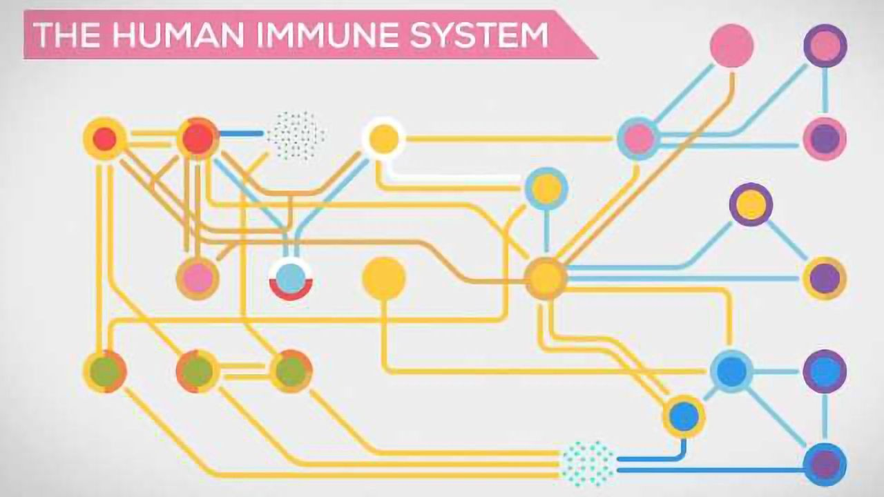 The Immune System Explained I – Bacteria Infection