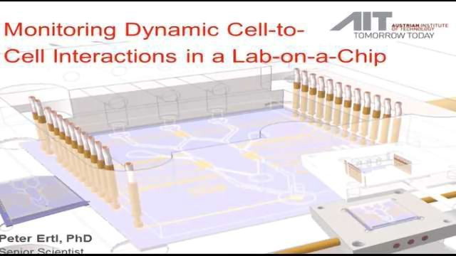 Monitoring Dynamic Interactions of Tumor Cells with Tissue and Immune Cells in a Lab-on-a-Chip