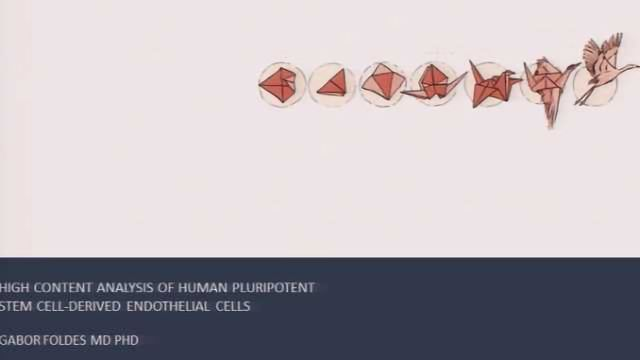 High Content Analysis Of Human Pluripotent Stem Cell-Derived Endothelial Cells