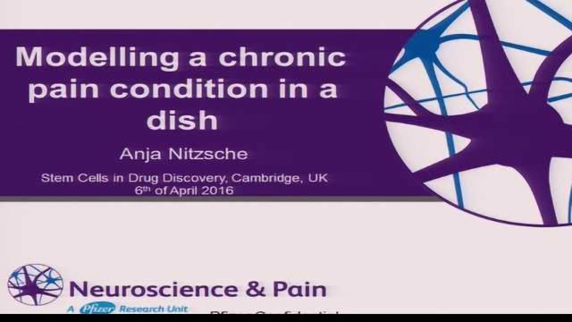 Modelling A Chronic Pain Condition In A Dish