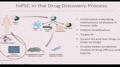 Utilizing hiPSC-Derived Neurons and Cardiomyocytes For Drug Screening