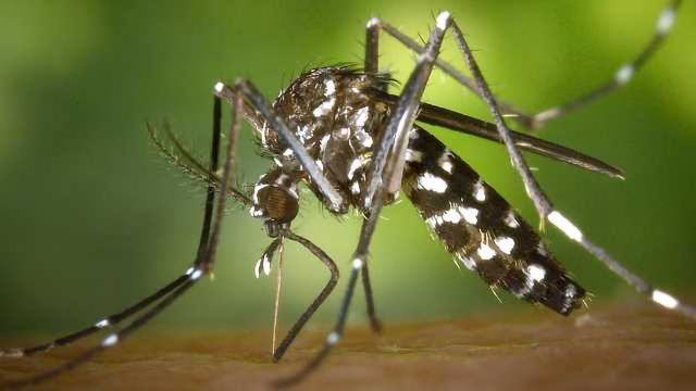 Modelling Zika's Effect On Brain Development -In A Dish