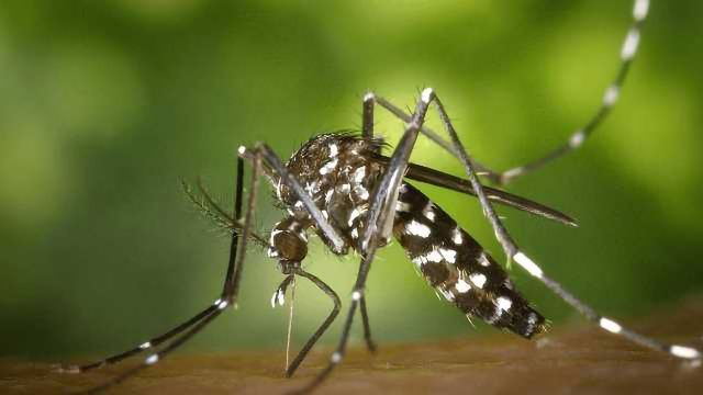 GMO Parasites Show Promise as Human Malaria Vaccine