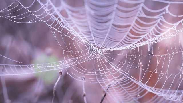 Artificial Spider Silk Can Now Be Made