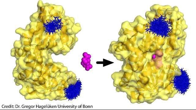 Bacterial Pac Man Molecule Snaps at Sugar
