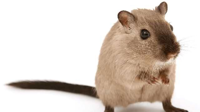 Researchers in Japan Have Discovered an Enzyme That Can Prevent Obesity in Mice
