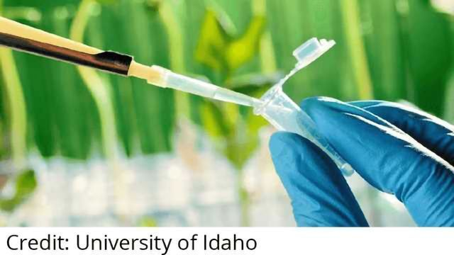 Monsanto, NRGene Announce Collaboration