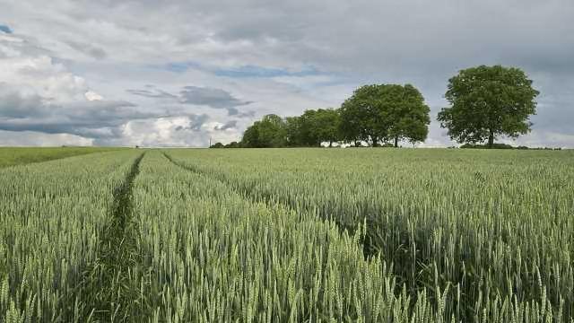 Uncovering Wheat's Hidden Treasures