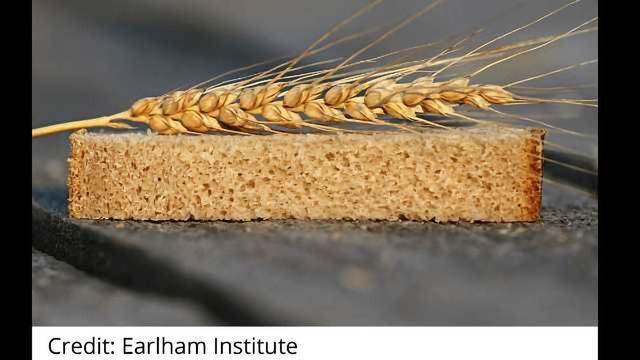 Can We Produce a Better Wheat Crop to Feed the World?