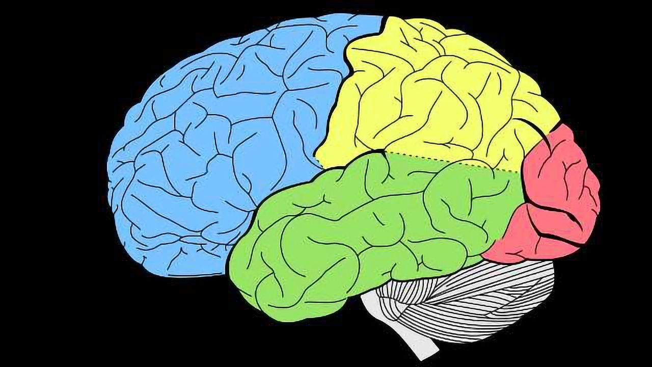 New Insights Into Cognitive Disorders
