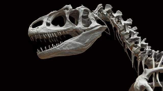 Collagen Peptides Isolated from an 80-Million-Year-Old Brachylophosaurus