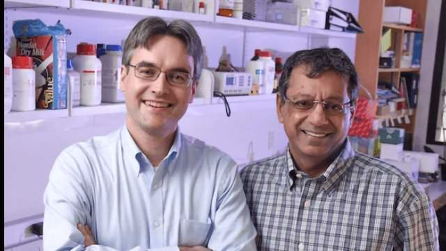 Potential New Target for Treating Glioblastoma