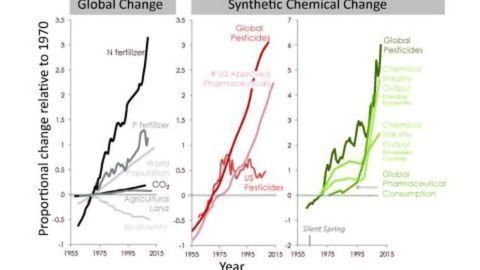 Synthetic Chemicals Are Agents of Global Change