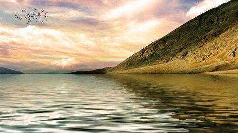 Algae Defence Mechanism Can Inhibit Marine Fouling