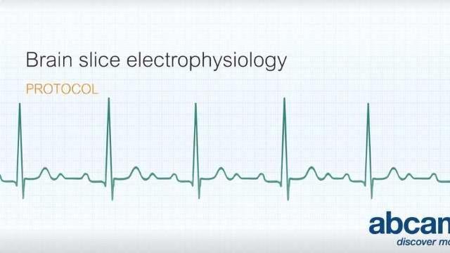 Brain Slice Electrophysiology