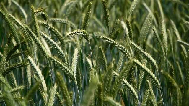 Breakthrough in Environmentally Friendly Pesticides