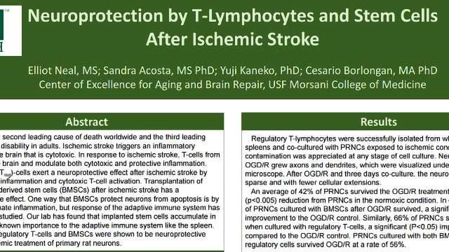 Neuroprotection by T-Lymphocytes and Stem Cells After Ischemic Stroke