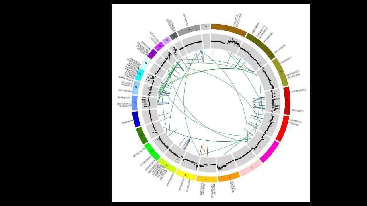 The Genomics of Cervical Cancer