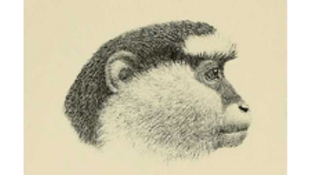 Linguistic methods uncover sophisticated meanings and monkey dialects