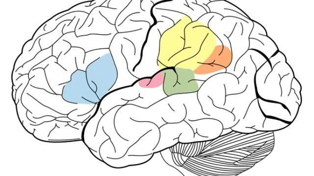 Testosterone therapy changes brain structures in female-to-male transsexuals