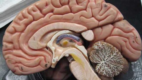 Investigating how 'chemo brain' develops in cancer patients