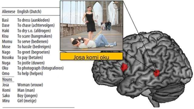 The brain watched during language learning