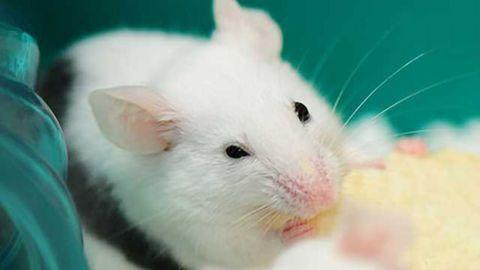 Eating disorder gene alters feeding and behavior in female mice