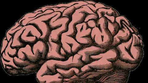 Cocaine Addiction Leads to Build-Up of Iron in Brain