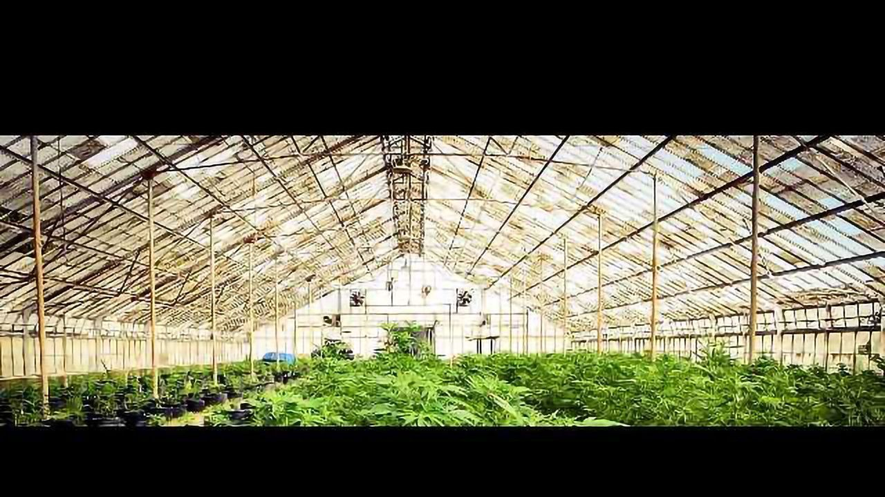 Marijuana Sales Creating Damage to the Environment