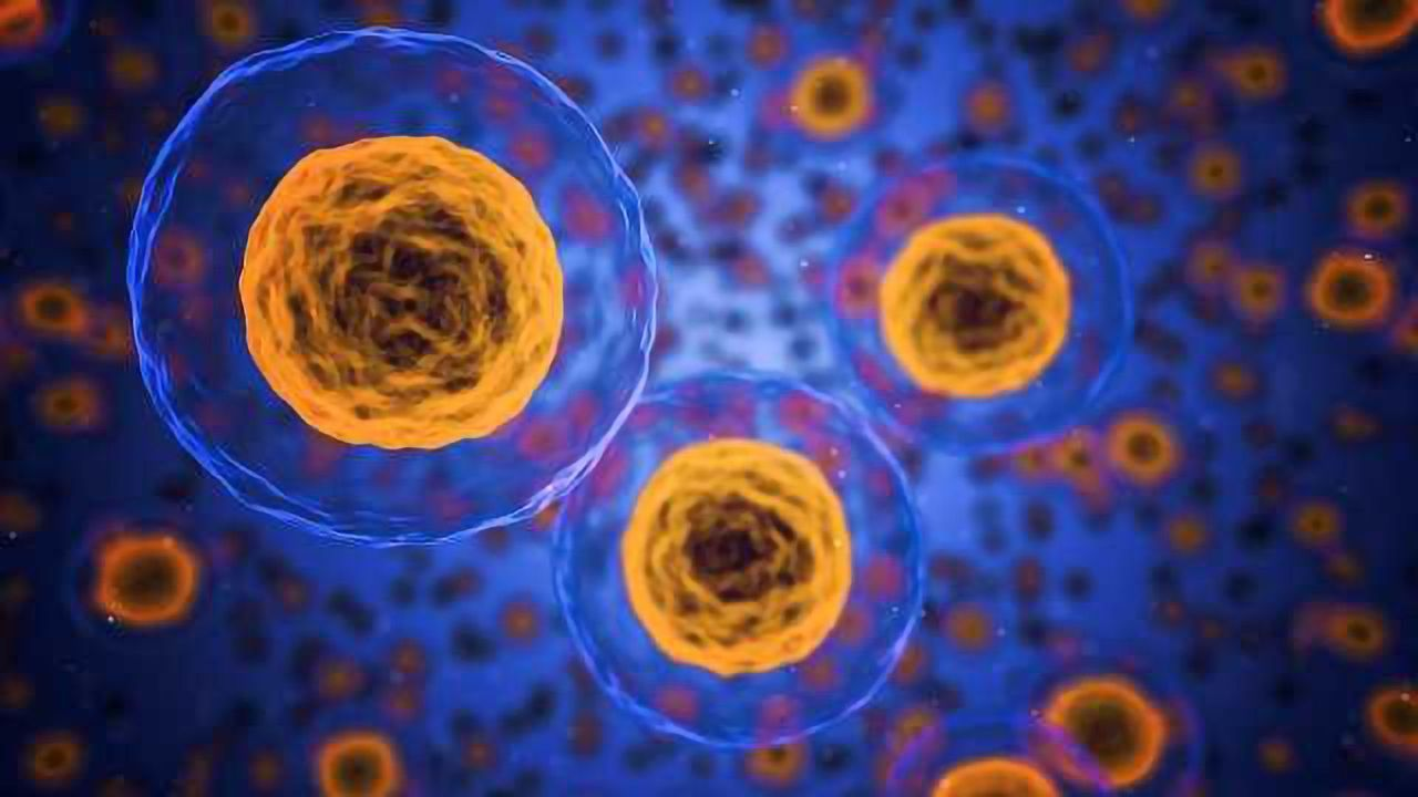 New Method Shows How Proteins Stabilize the Cell Surface