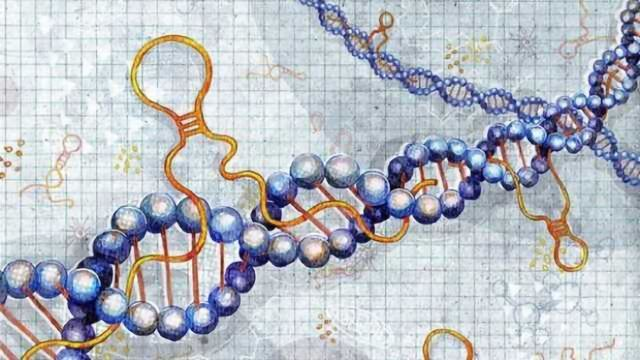 Decoding the Dark Side of the Genome