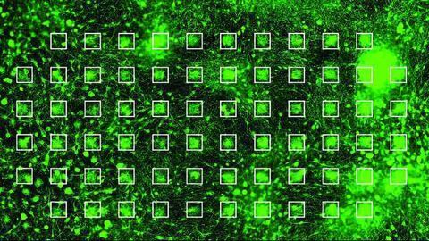 Neuronal Networks Grown on a Chip