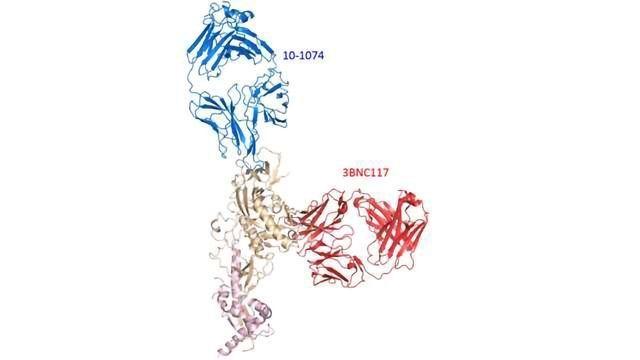 Dual Antibody Attack Suppresses HIV in Monkeys